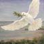 painting biblical, peace, white dove Atelier for Hope